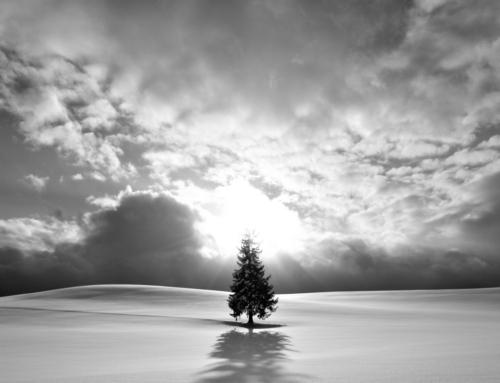 丘を散歩、クリスマスツリーの木(モノクロ)