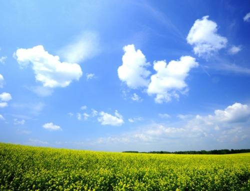 雨が降らない富良野や美瑛(花畑の最盛期)