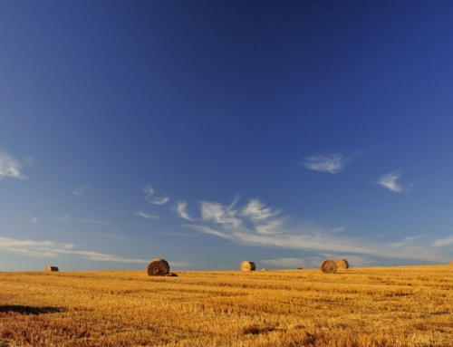夏空と麦稈ロール